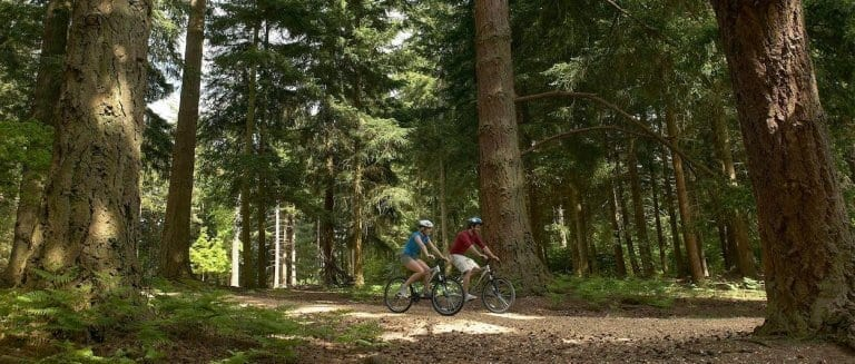 How to Visit the New Forest in a Motorhome