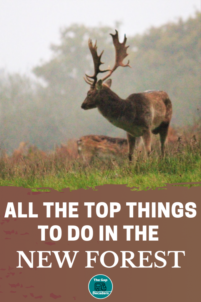 Top things to do in the New Forest