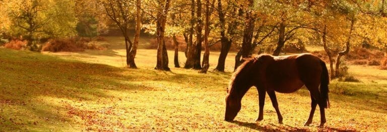 The New Forest UK, one of the best European vacations in autumn