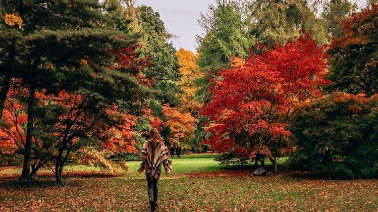 Westonbirt, a great place for autumn weekend getaways UK